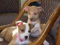 Bailey and Bentley @7 weeks